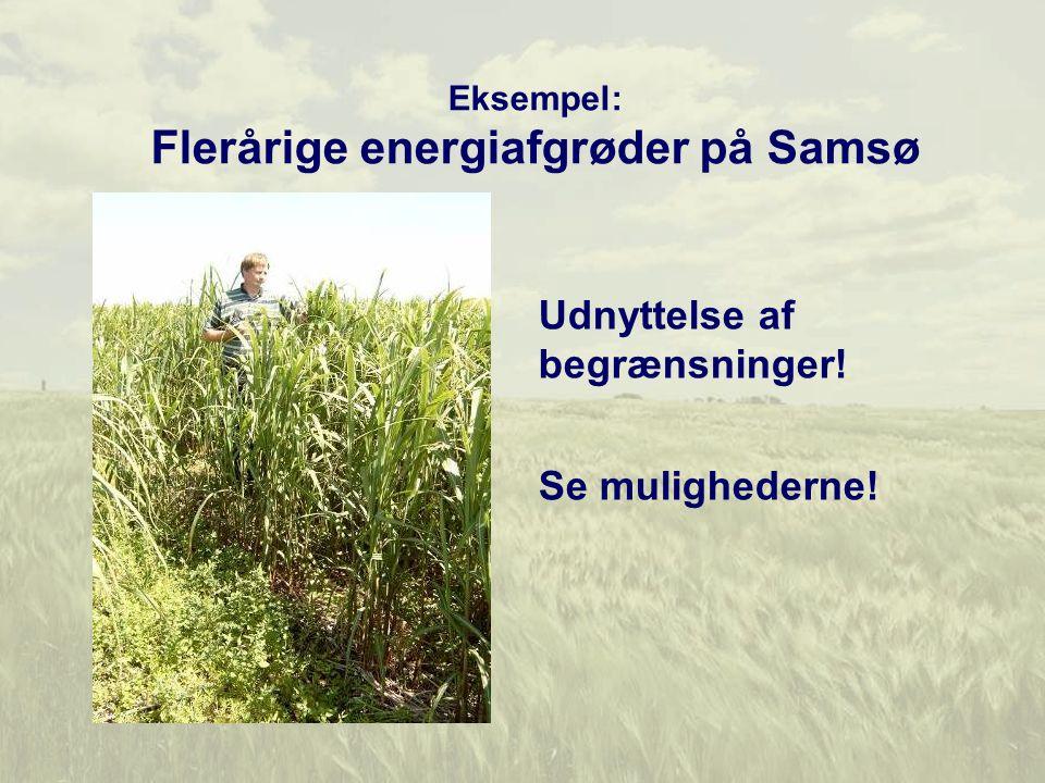 Eksempel: Flerårige energiafgrøder på Samsø