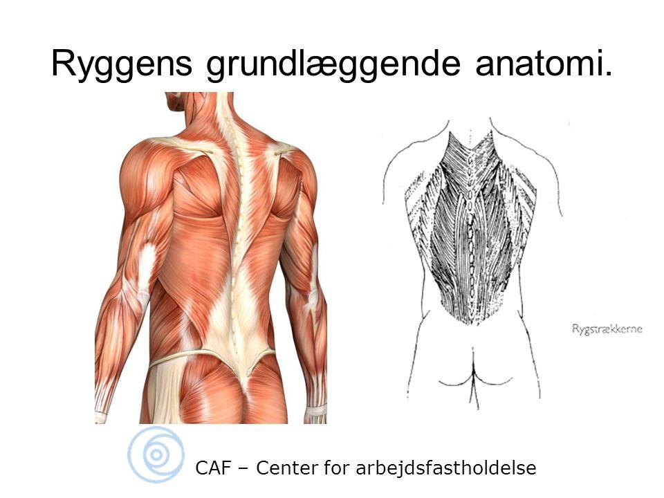 Ryggens grundlæggende anatomi.