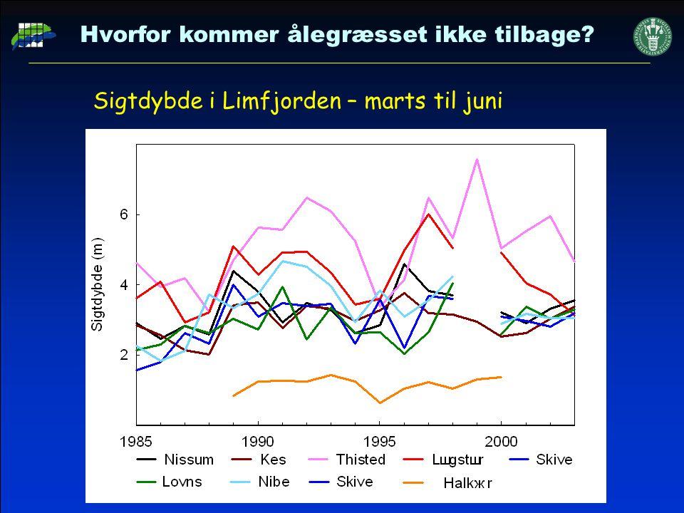Sigtdybde i Limfjorden – marts til juni