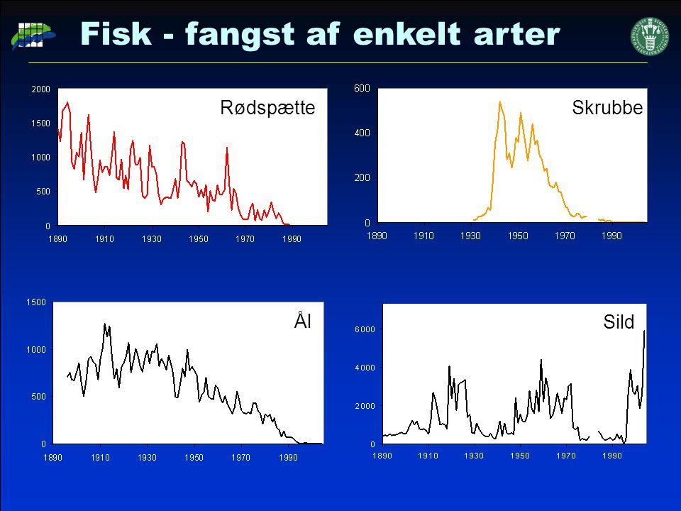 Fisk - fangst af enkelt arter