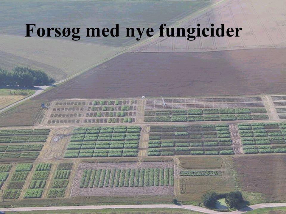 Forsøg med nye fungicider