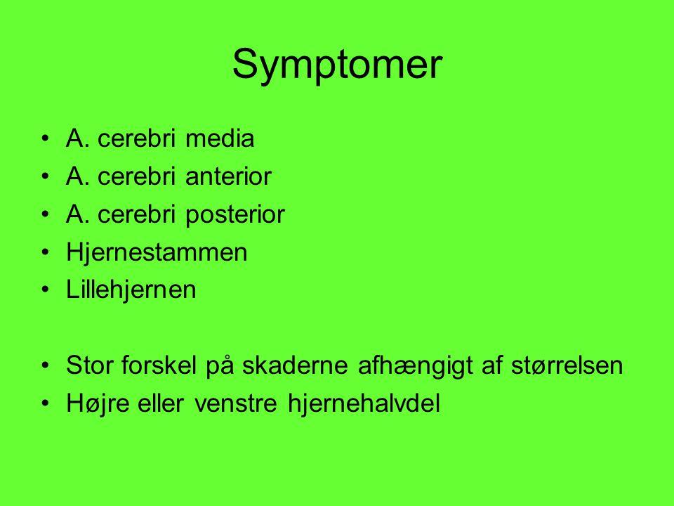 Symptomer A. cerebri media A. cerebri anterior A. cerebri posterior