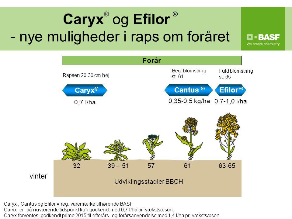 Caryx® og Efilor ® - nye muligheder i raps om foråret