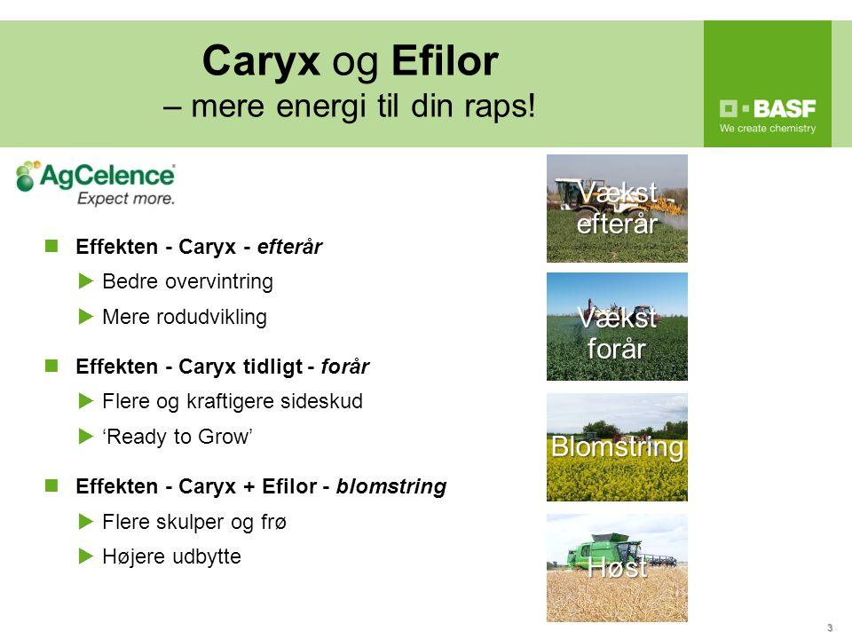 Caryx og Efilor – mere energi til din raps!