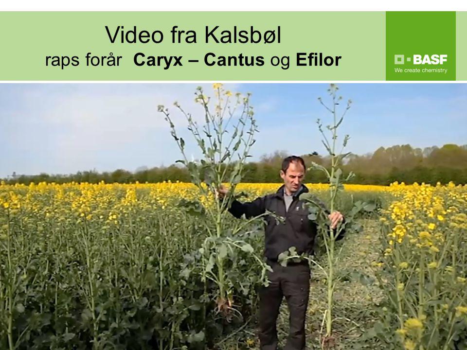 Video fra Kalsbøl raps forår Caryx – Cantus og Efilor