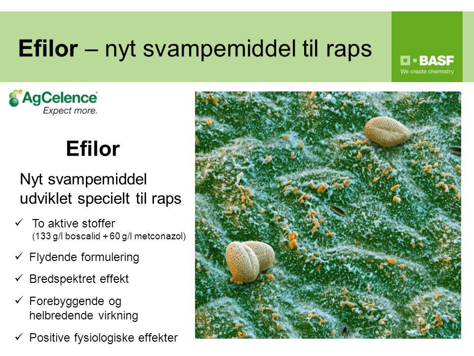 Efilor – nyt svampemiddel til raps