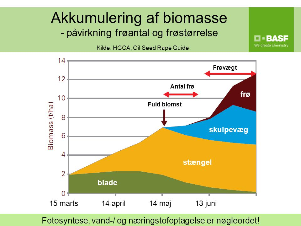 Akkumulering af biomasse - påvirkning frøantal og frøstørrelse