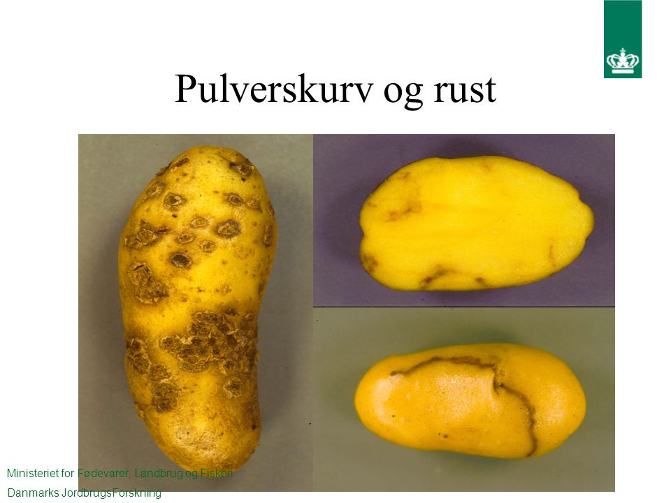 Pulverskurv og rust Ministeriet for Fødevarer, Landbrug og Fiskeri