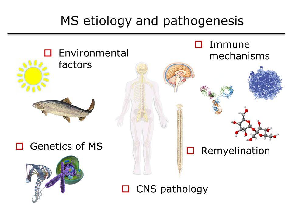 Immune mechanisms Environmental factors Genetics of MS Remyelination CNS pathology