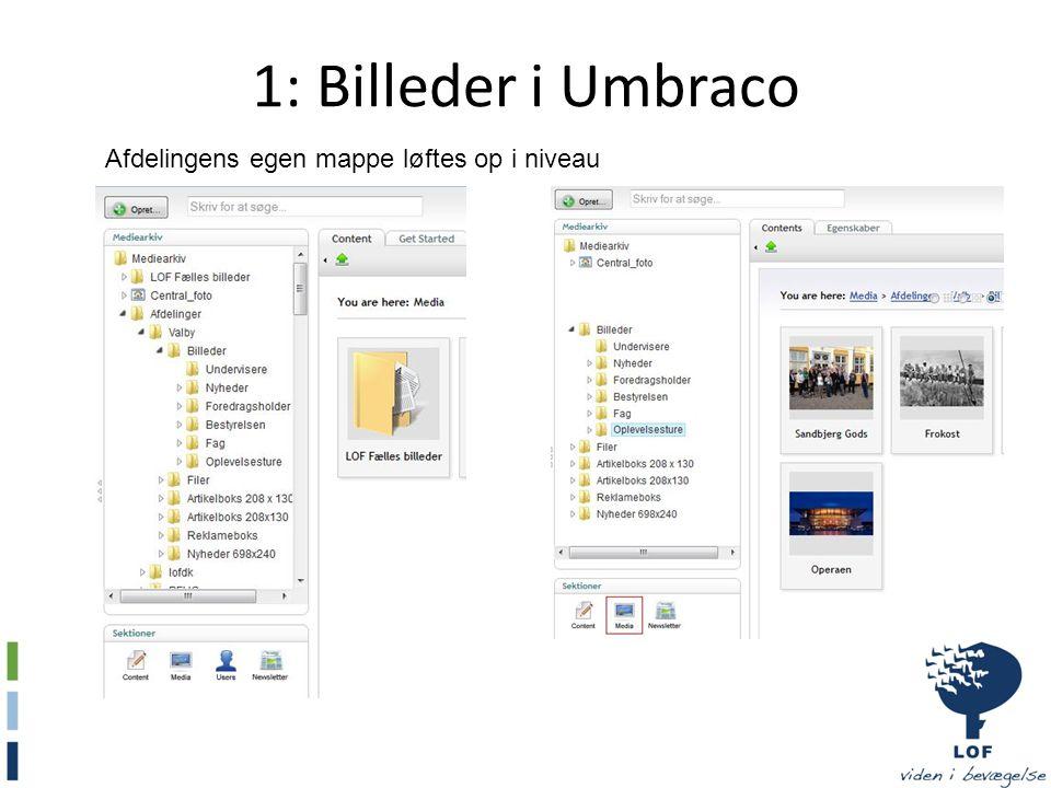 1: Billeder i Umbraco Afdelingens egen mappe løftes op i niveau