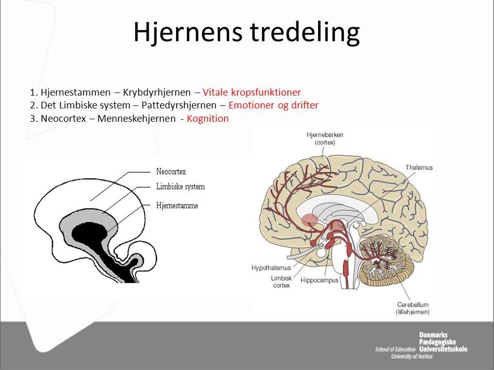 Hjernens tredeling 1. Hjernestammen – Krybdyrhjernen – Vitale kropsfunktioner 2.
