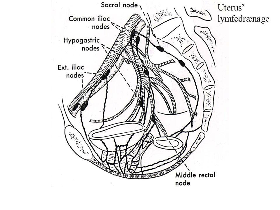 Uterus' lymfedrænage