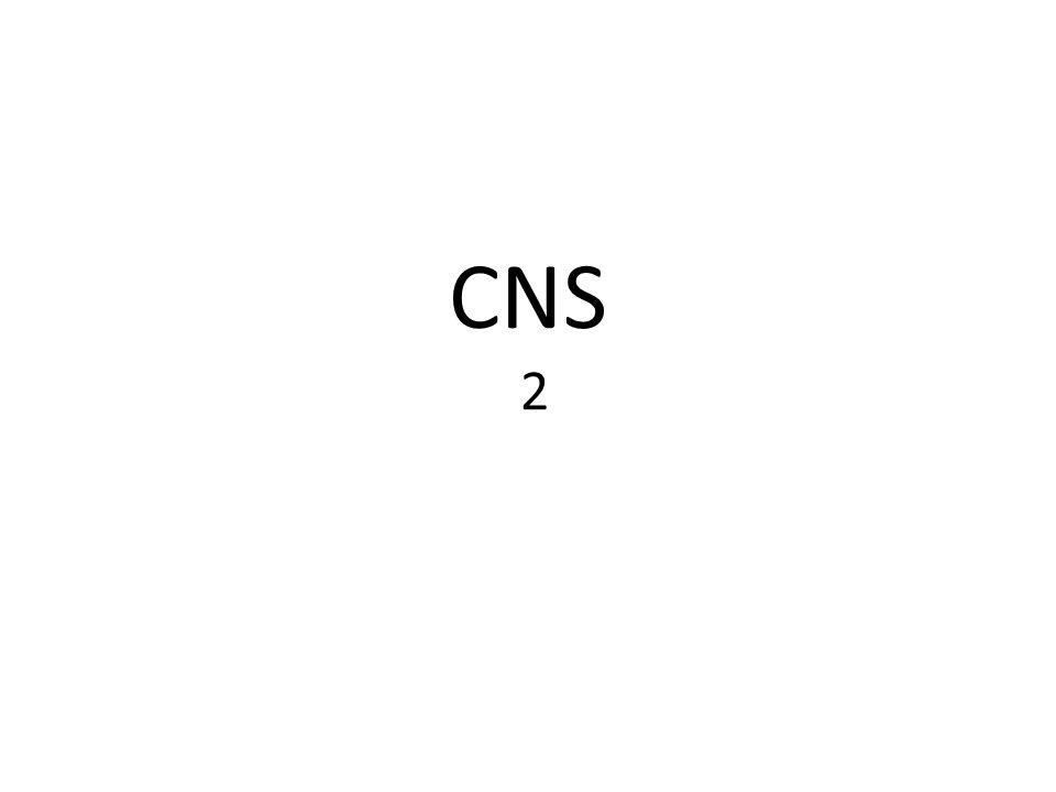 CNS 2