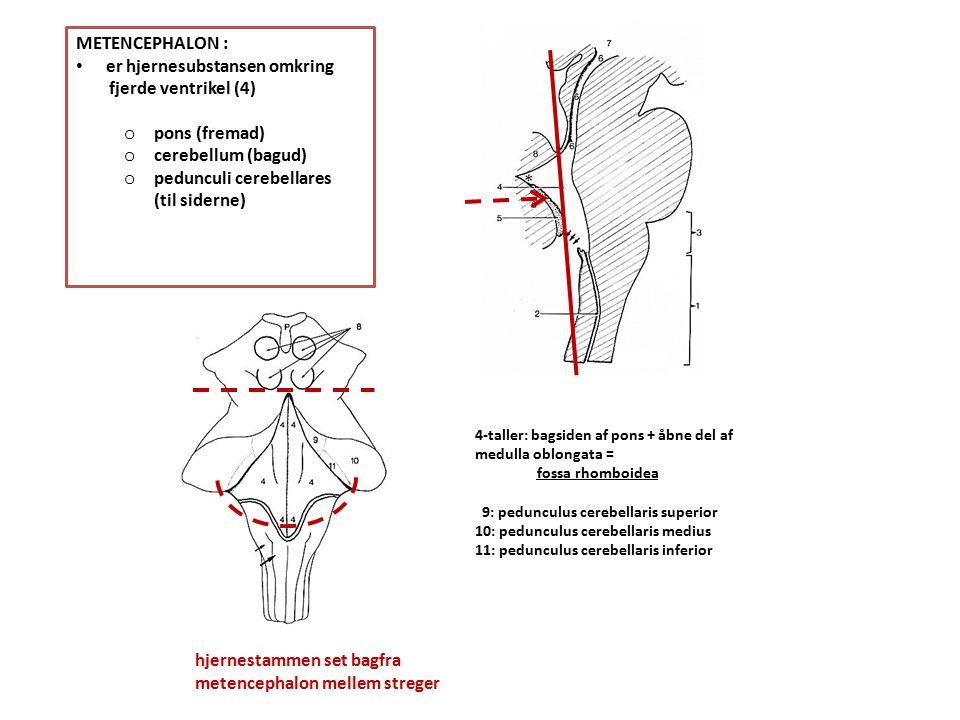 er hjernesubstansen omkring fjerde ventrikel (4) pons (fremad)