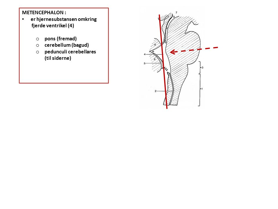 METENCEPHALON : er hjernesubstansen omkring. fjerde ventrikel (4) pons (fremad) cerebellum (bagud)