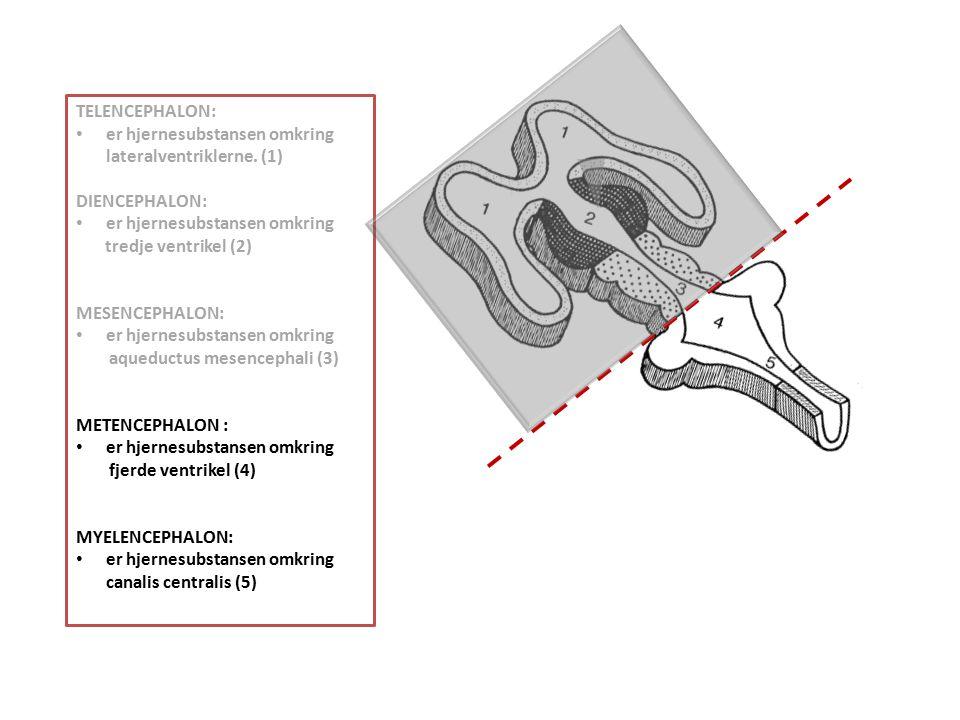 TELENCEPHALON: er hjernesubstansen omkring lateralventriklerne. (1) DIENCEPHALON: er hjernesubstansen omkring.