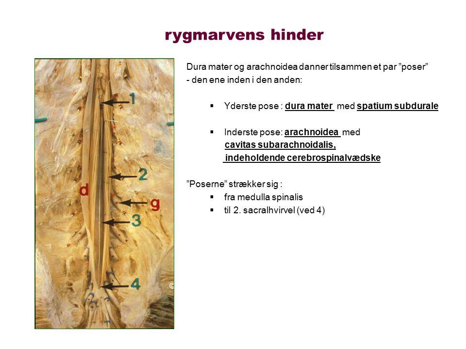 rygmarvens hinder Dura mater og arachnoidea danner tilsammen et par poser - den ene inden i den anden: