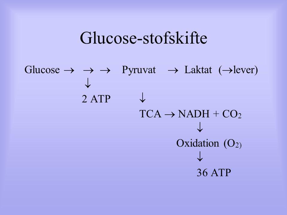 Glucose-stofskifte Glucose    Pyruvat  Laktat (lever)  2 ATP 