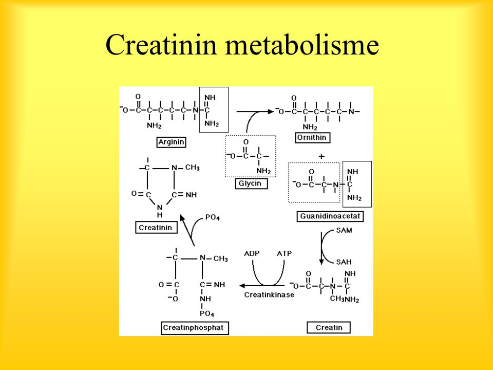 Creatinin metabolisme