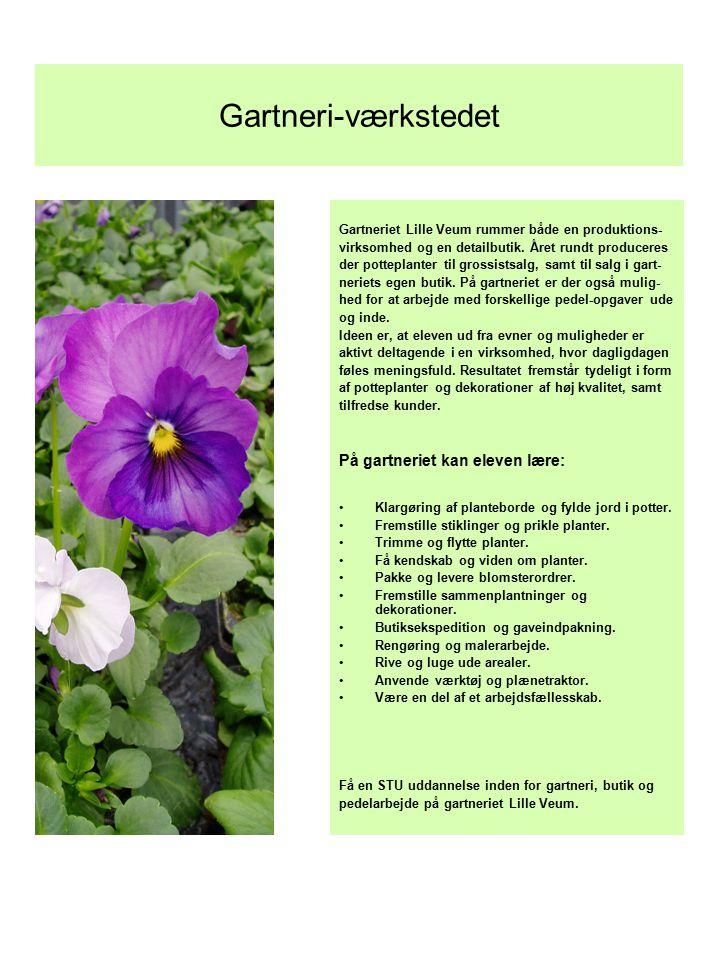 Gartneri-værkstedet På gartneriet kan eleven lære: