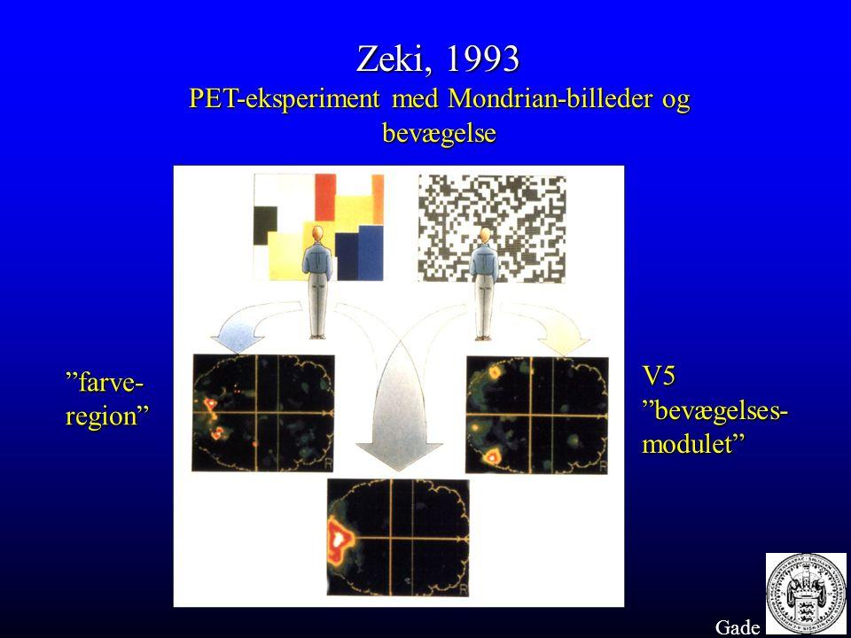 PET-eksperiment med Mondrian-billeder og