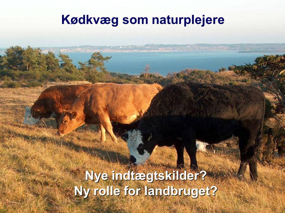 Kødkvæg som naturplejere Ny rolle for landbruget