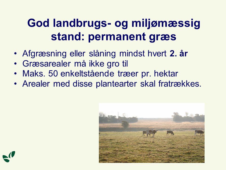 God landbrugs- og miljømæssig stand: permanent græs