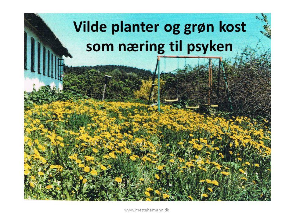 Vilde planter og grøn kost som næring til psyken