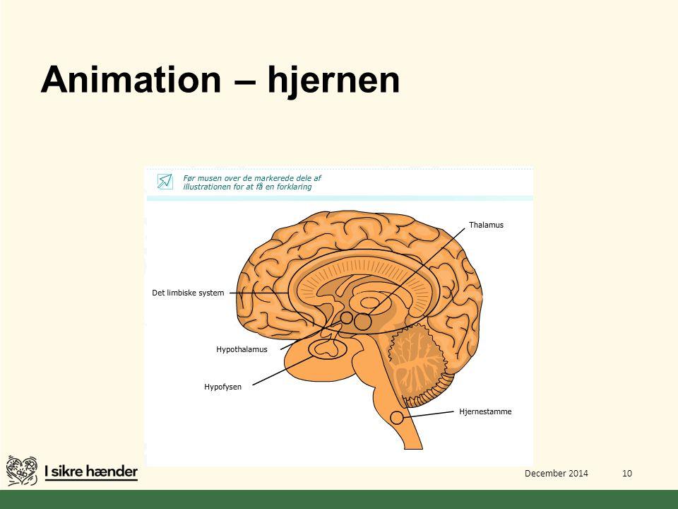 inddeling af hjernen