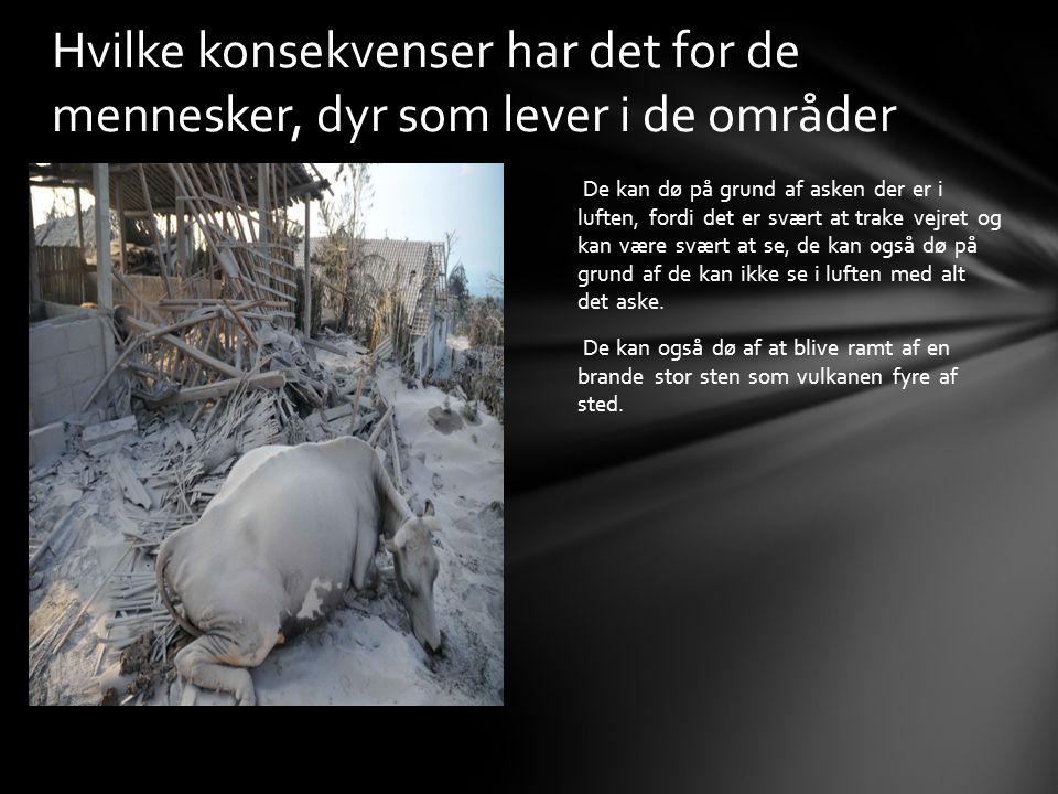 Hvilke konsekvenser har det for de mennesker, dyr som lever i de områder