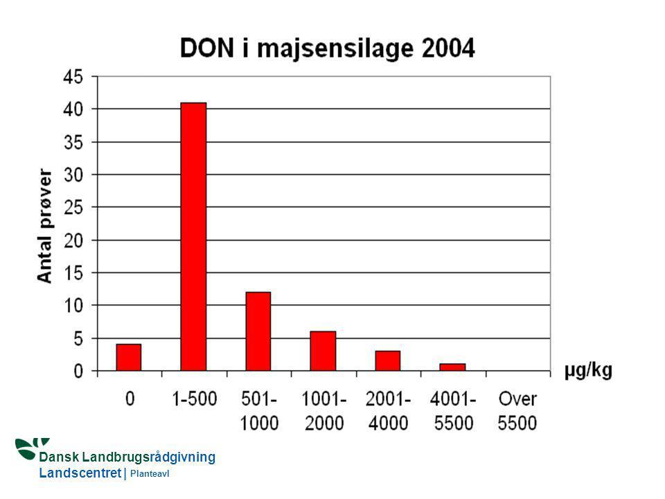 Landscentret Planteavl og Dansk Kvæg gennemfører i 2004-2007 ligeledes en monitering af fusariumtoksiner i majsensilage. Der indhentes også oplysninger om dyrkningsteknik og klimaforhold. Prøverne udtages ved høst, så indholdet af toksiner kan relateres til dyrkningsteknik. Den i EU foreslåede grænseværdi er 5.000 μg/kg DON (5500 μg/kg tørstof) og 500 μg/kg ZEA ( 570 μg/kg tørstof) i foderblandinger til malkekvæg og kalve. Kun 1 af prøverne i moniteringen i 2004 lå i nærheden af dette niveau. Indholdet af ZEA var også meget lavt . Resultatet af moniteringen 2005 foreligger ikke p.t, men de hidtidige prøver har vist et lavt indhold. De lave indhold er i overensstemmelse med andre undersøgelser foretaget af Dansk Kvæg, Plantedirektoratet og af analysefirmaet Blgg Oosterbeek, som har analyseret prøver udtaget i stakken. Fusariumsvampene behøver ilt og over 18-22 pct. vand for at brede sig. Der er nu i majs øget fokus på toksinproducerende svampe, som udvikles i stakken (Penicillium roqueforti og Aspergillus fumigatus).