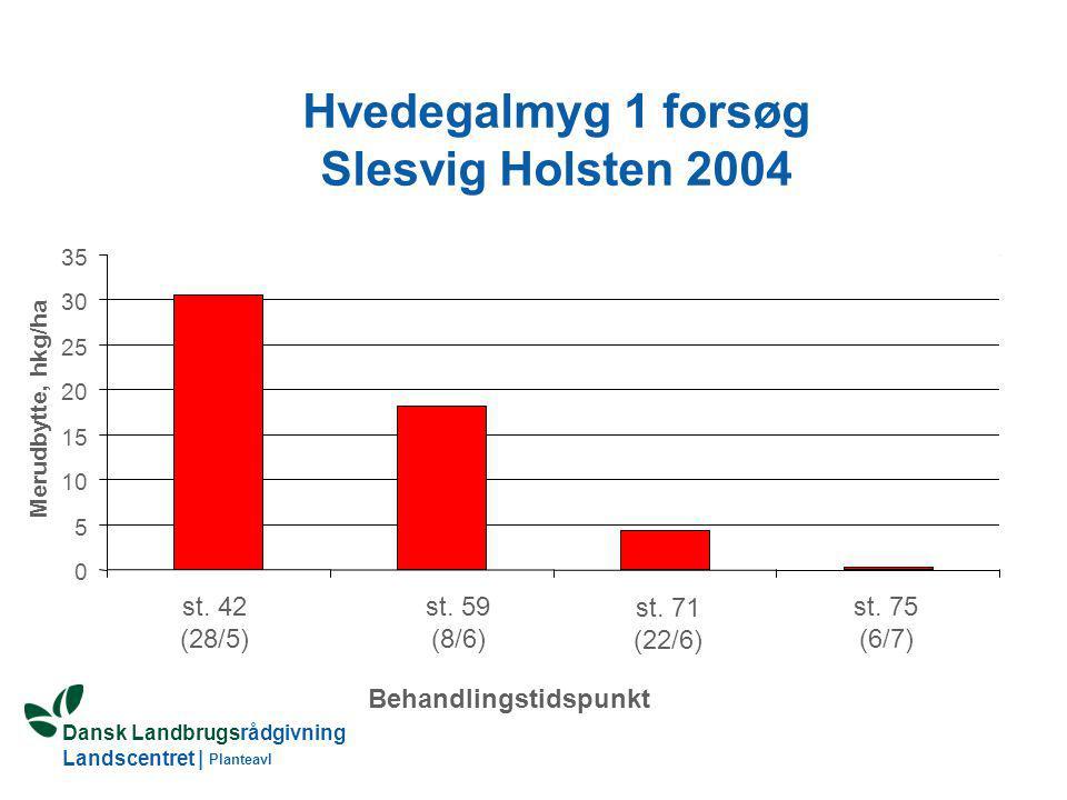 Hvedegalmyg 1 forsøg Slesvig Holsten 2004