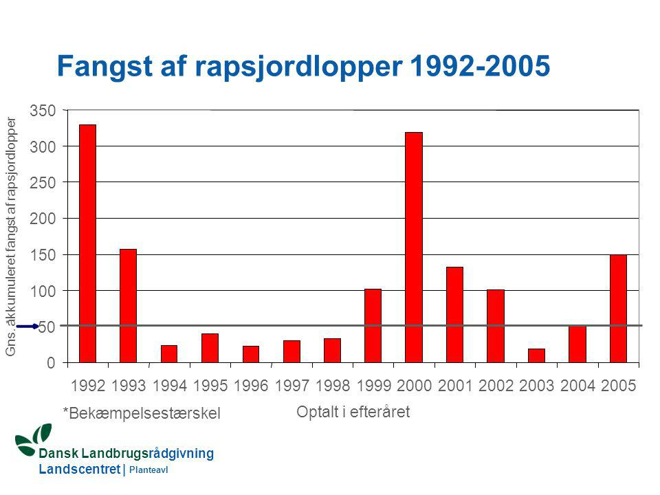 Fangst af rapsjordlopper 1992-2005