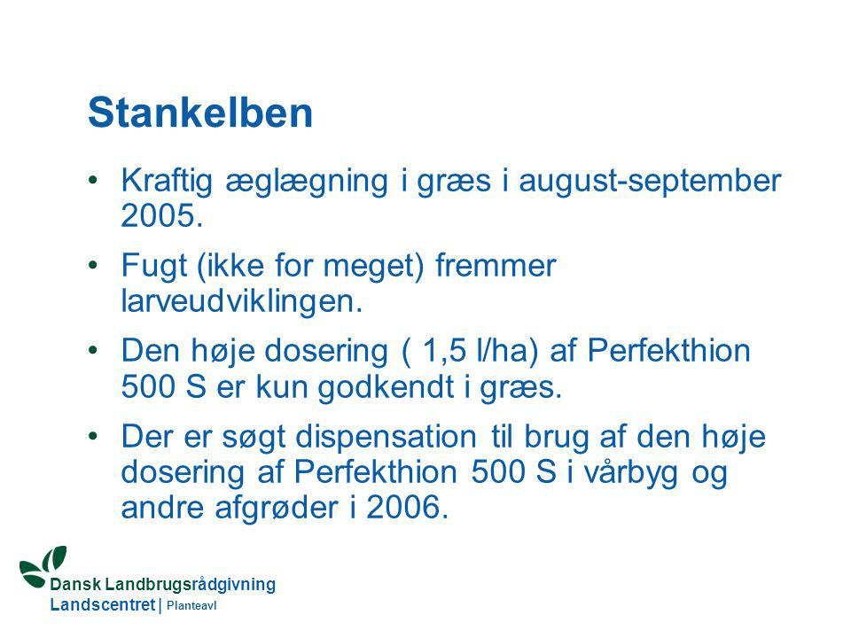 Stankelben Kraftig æglægning i græs i august-september 2005.