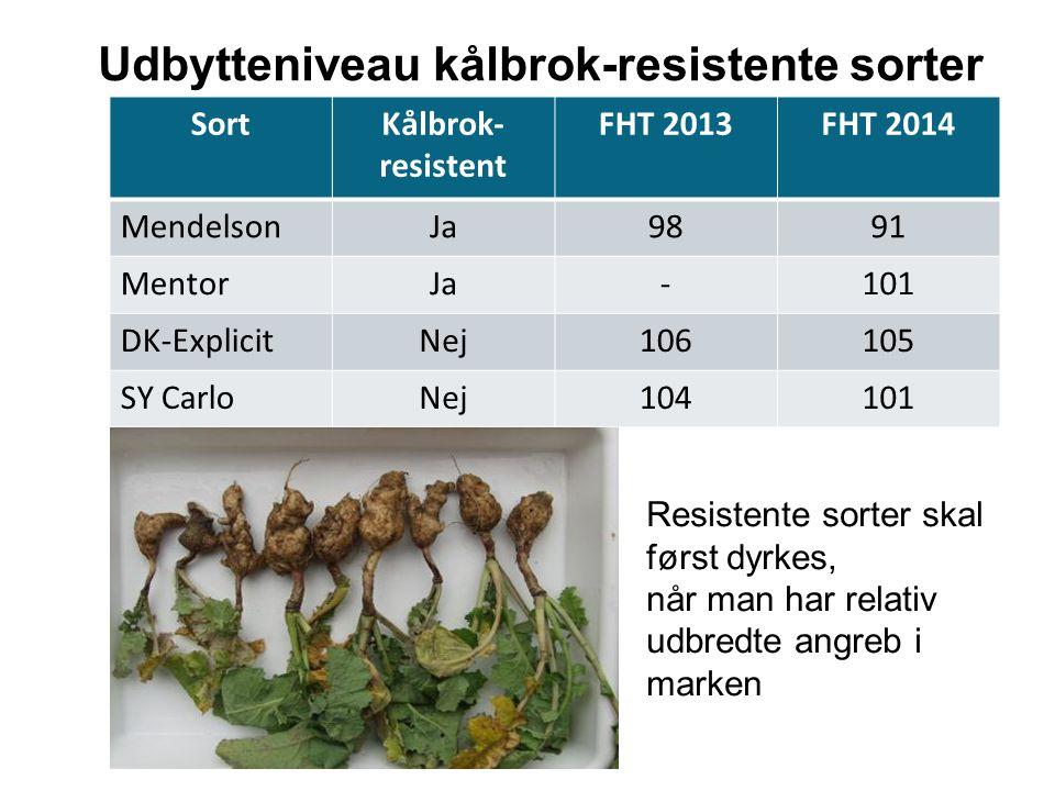 Udbytteniveau kålbrok-resistente sorter