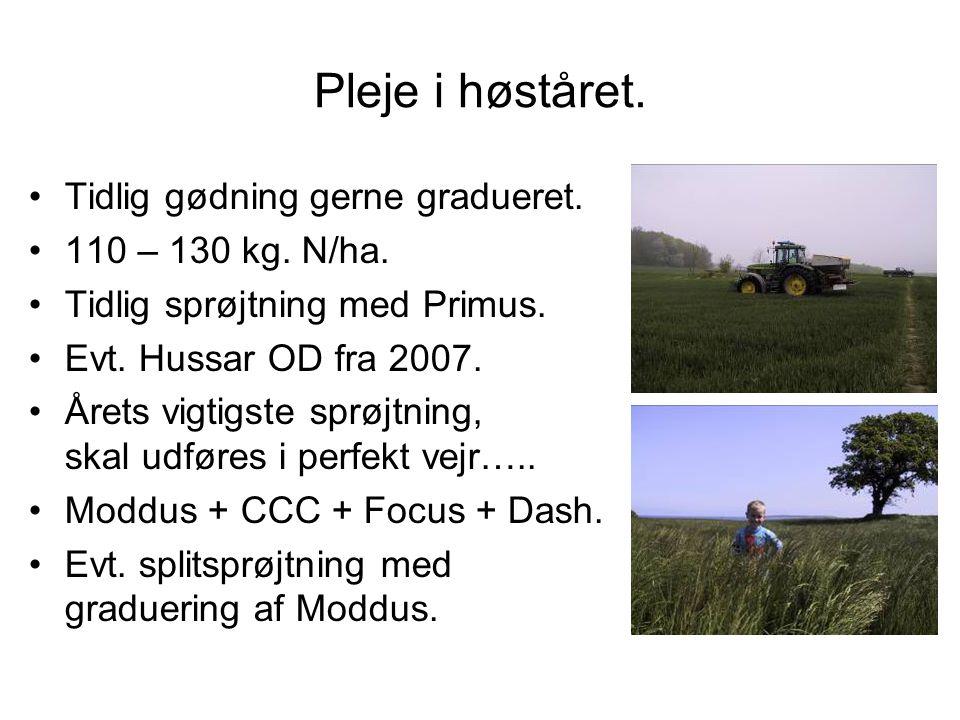 Pleje i høståret. Tidlig gødning gerne gradueret. 110 – 130 kg. N/ha.
