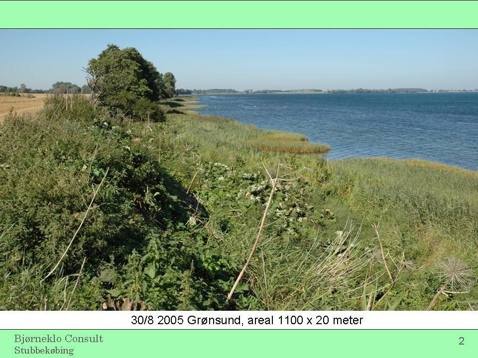 30/8 2005 Grønsund, areal 1100 x 20 meter