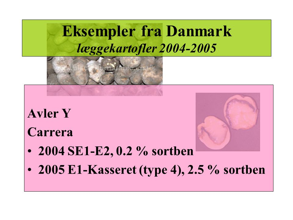 Eksempler fra Danmark læggekartofler 2004-2005