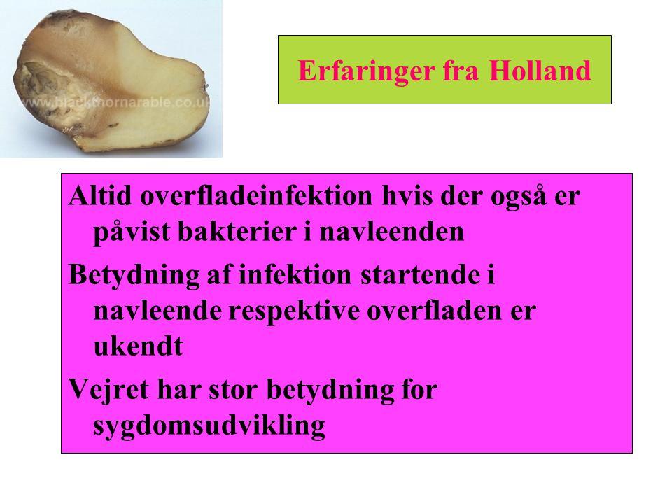 Erfaringer fra Holland