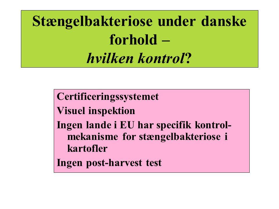 Stængelbakteriose under danske forhold – hvilken kontrol