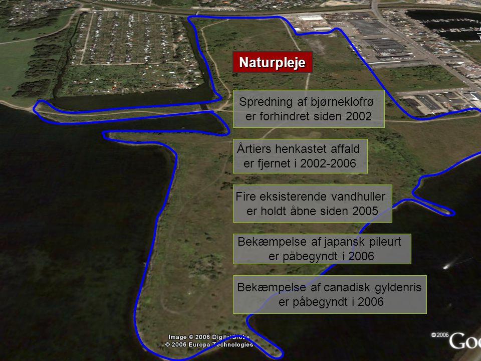 Naturpleje Spredning af bjørneklofrø er forhindret siden 2002