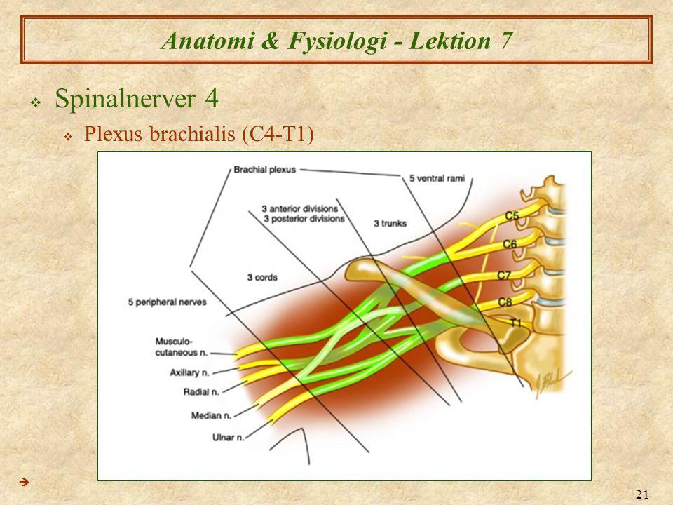 Anatomi & Fysiologi - Lektion 7