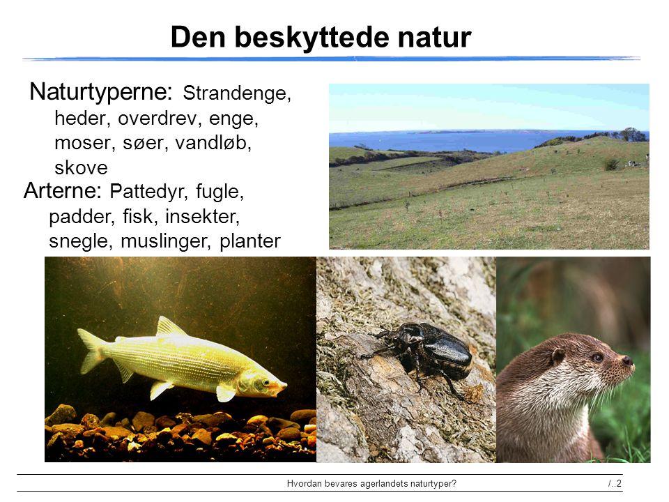 Den beskyttede natur Naturtyperne: Strandenge, heder, overdrev, enge, moser, søer, vandløb, skove.