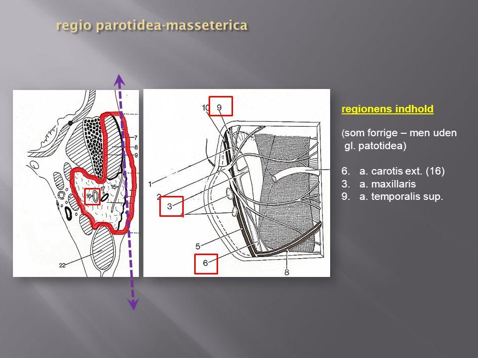 regio parotidea-masseterica