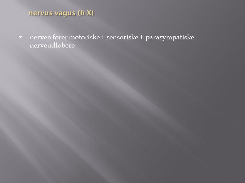 nervus vagus (h-X) nerven fører motoriske + sensoriske + parasympatiske nerveudløbere