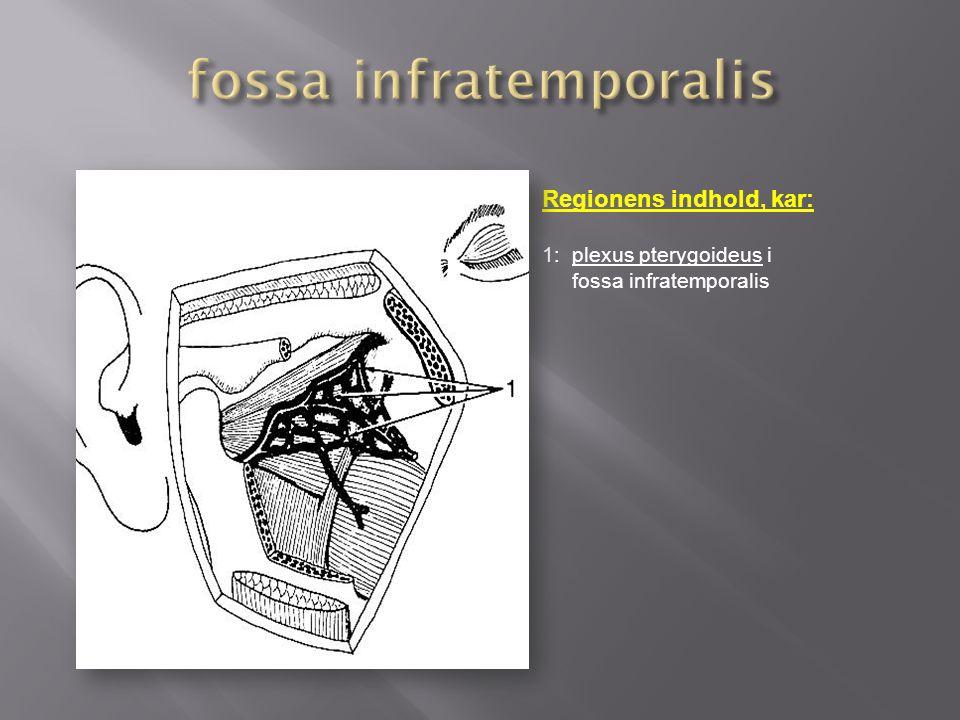 fossa infratemporalis