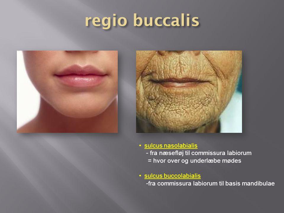 regio buccalis sulcus nasolabialis