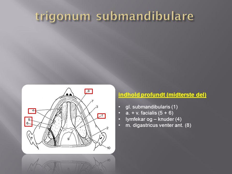 trigonum submandibulare