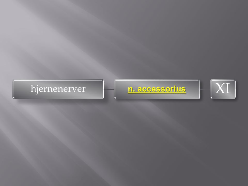 hjernenerver n. accessorius XI
