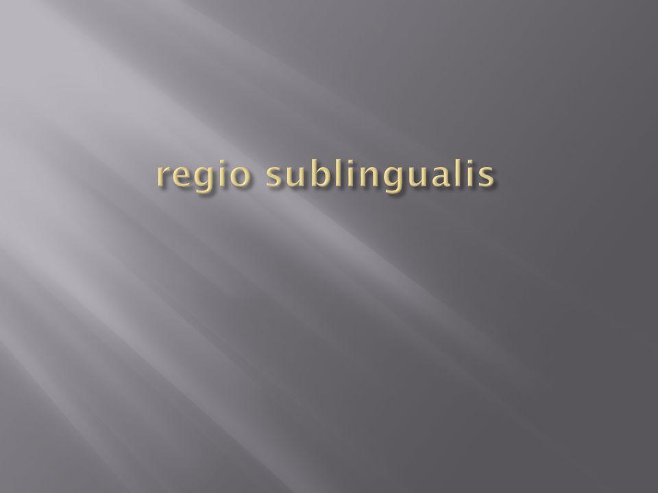 regio sublingualis